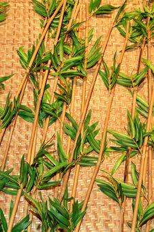 Free Beautiful Green Bamboo Royalty Free Stock Photo - 15211285