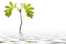 Free Small Plant Is Reflecting In A Water Royalty Free Stock Photos - 15211318