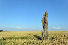 Free Wheat Field Stock Photo - 15213700