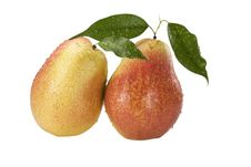 Free Two Pear With Drops Of Dew On A White Royalty Free Stock Photo - 15214155