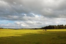 Free Scottish Landscape With Horses Stock Photography - 15214262