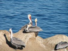 Free Resting Pelicans On A Rock Stock Photos - 15214503