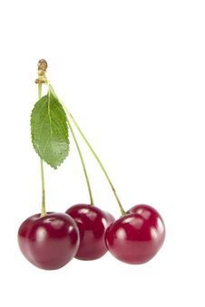 Free Three Cherries With Leaves On A Branch Stock Photo - 15214850