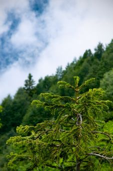 Free Above Spruce Stock Photos - 15215153