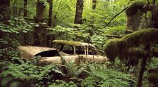 Free Old Car In The Woods Royalty Free Stock Image - 15216066