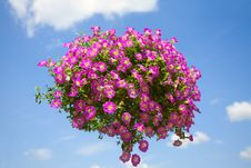 Free Pink Flower Bouquet Stock Photos - 15216253