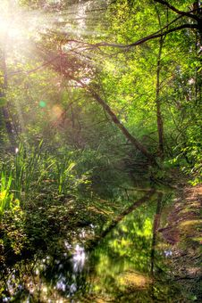 Free Summer Forest Landscape Stock Photo - 15216570