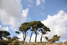 Free Line Of Trees Against Blue Sky Stock Photos - 15217453