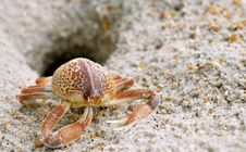 Free Crab Stock Image - 15218111