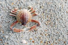 Free Crab Stock Photography - 15218122