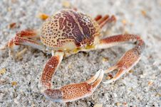 Free Crab Stock Photography - 15218132