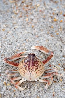 Free Crab Stock Image - 15218151