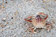 Free Crab Stock Images - 15218154