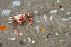 Free Crab Stock Photos - 15218173