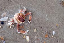 Free Crab Royalty Free Stock Photos - 15218178