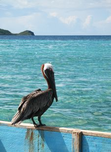 Free Caribbean Pelican Perched On Canoe Royalty Free Stock Image - 15218436