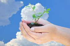 Free Plant In Hand Royalty Free Stock Photos - 15218438