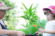 Free Grandmother And Grandson Plant Plant Stock Image - 15218681