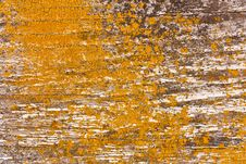 Free Wood And Lichen Background Stock Photography - 15219452
