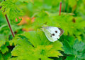 Free Butterfly On Green Leaf Stock Photography - 15221292
