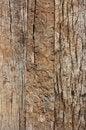Free Wall Wood Royalty Free Stock Photos - 15224578