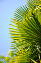 Free Palmtree Stock Images - 15225664