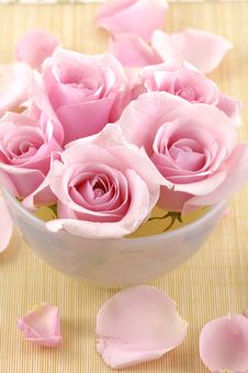 Free Rose In Vase Royalty Free Stock Photography - 15220927