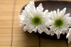 Free Bowl Of Chrysanthemum Stock Image - 15221231