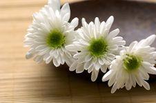 Free Bowl Of Chrysanthemum Royalty Free Stock Photo - 15221245