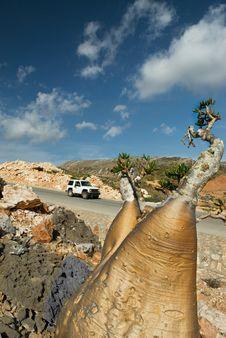 Free Socotra 351 Royalty Free Stock Photos - 15221608