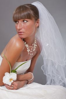 Free Sensual Bride With Veil And Flower Stock Images - 15224534