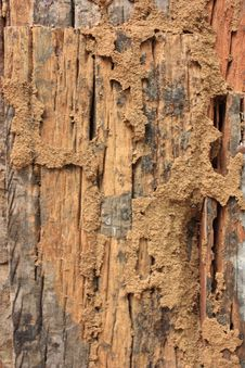 Free Wall Wood Stock Photography - 15225052