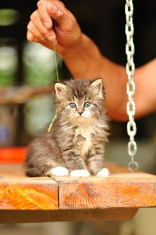 Free Kitten Portrait Royalty Free Stock Images - 15225299