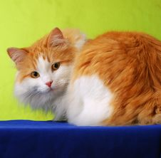 Ginger Cat Against Green Royalty Free Stock Image