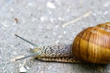 Free Snail Stock Photo - 15225510