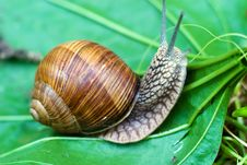 Free Snail Stock Photos - 15225523