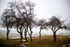 Free Trees Stock Photos - 15225563