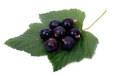 Free Black Currant Leaf On Stock Photo - 15225660