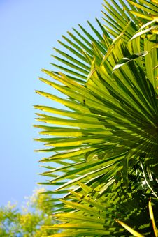 Free Palmtree Stock Images - 15225664
