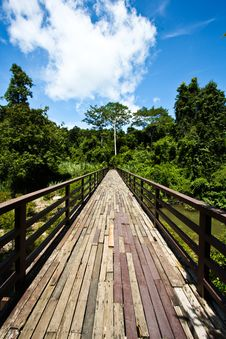 Free Wood Bridge To Jungle With Sky Stock Photography - 15226522