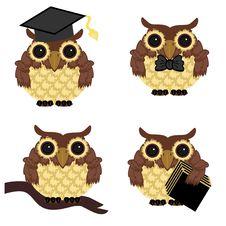 Free Four Owls On White Background Stock Photo - 15228310