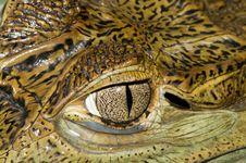 Free Crocodile Eye Stock Photography - 15229872