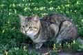 Free Grey Cat Stock Photo - 15230200