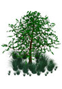 Free Green Tree And Grass Royalty Free Stock Images - 15237609