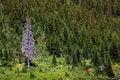 Free Lone Dry Tree Stock Photos - 15238043