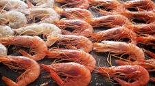 Free Grilled Prawns Royalty Free Stock Photography - 15230177