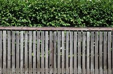 Free Hedge And Fence Stock Image - 15230521