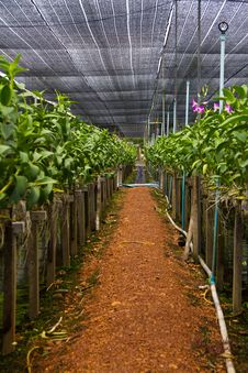 Free Orchid Farm 2 Stock Photography - 15233782