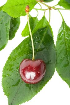 Free Sweet Cherry On Leaves Royalty Free Stock Images - 15234019
