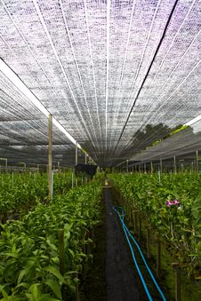 Free Orchid Farm 3 Stock Image - 15234141